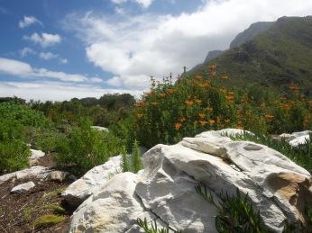 Harold Porter National Botanic Garden 7