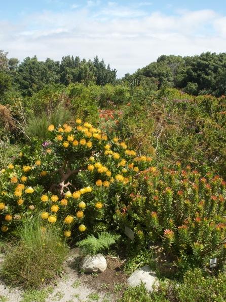 Harold Porter National Botanic Garden 5