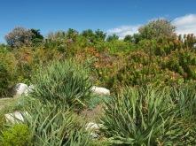Harold Porter National Botanic Garden 4