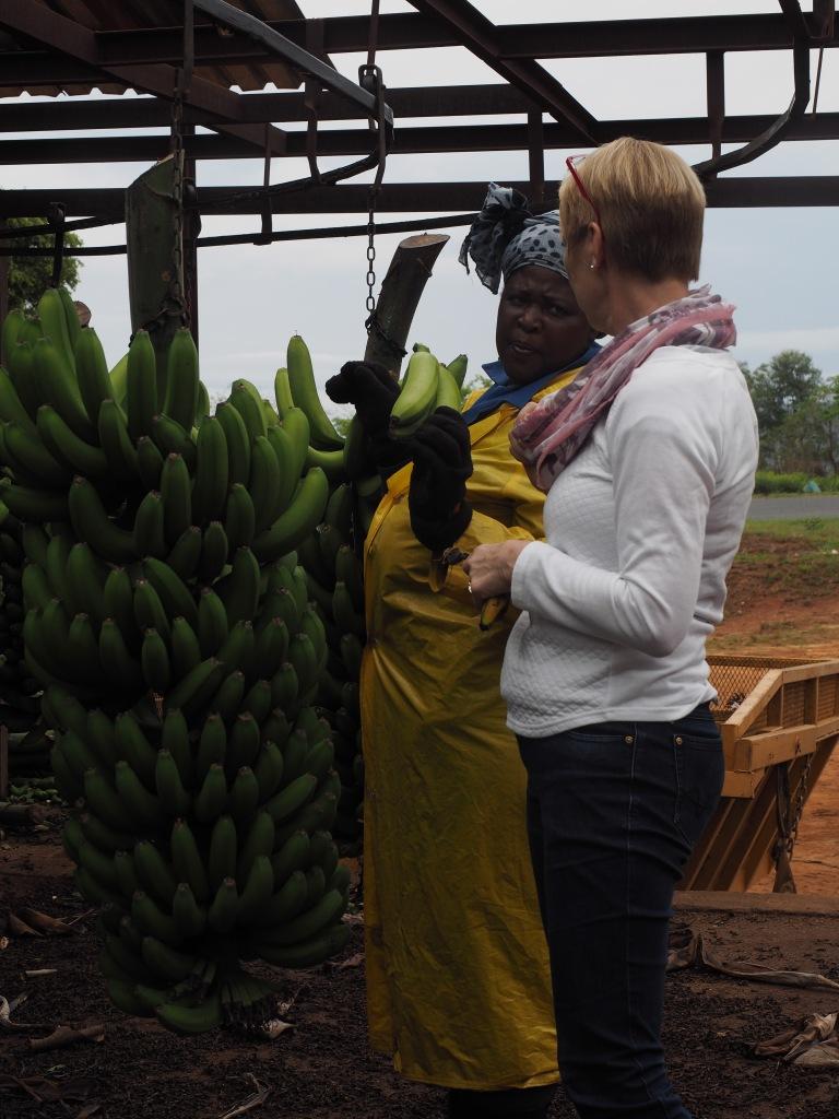 Mama weiss alles über Bananen, ist selber schon ganz gelb.