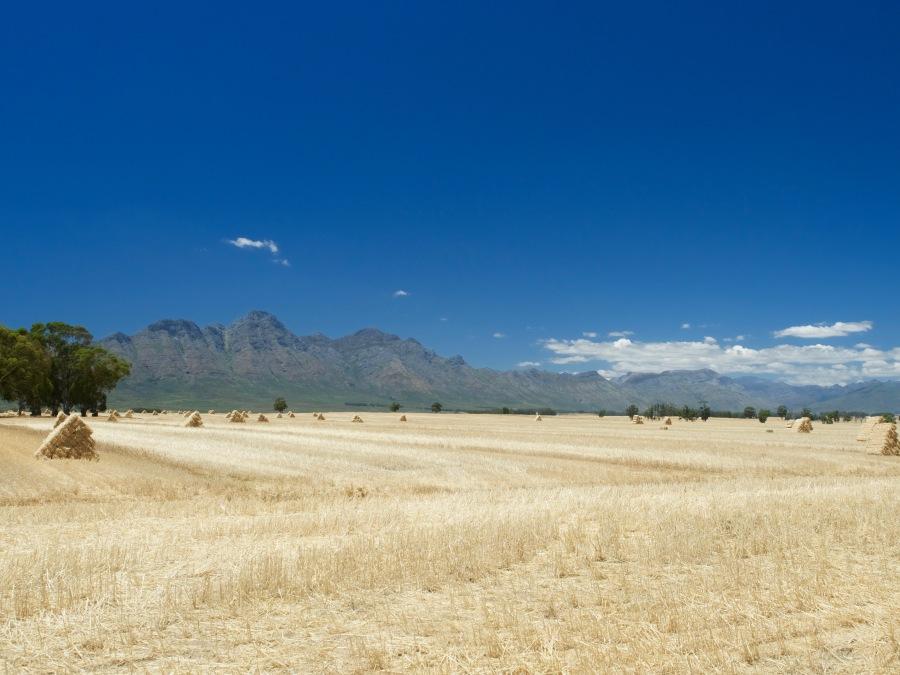 Kornfelder erstrecken sich über dutzende Kilometer